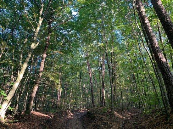 Erdő, amint kilépünk a szállásról